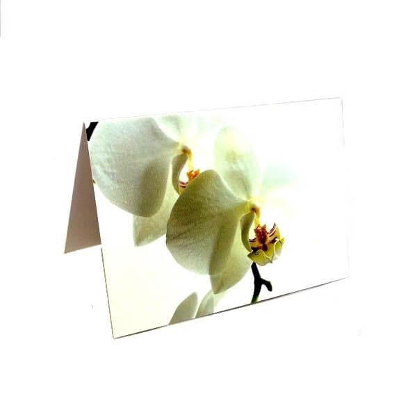 """Atvirukas """"Balta orchidėja"""""""