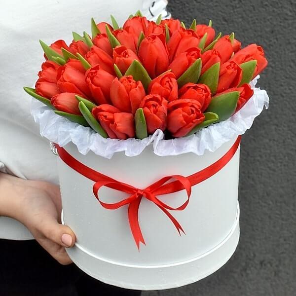 Raudonos tulpės dėžutėse