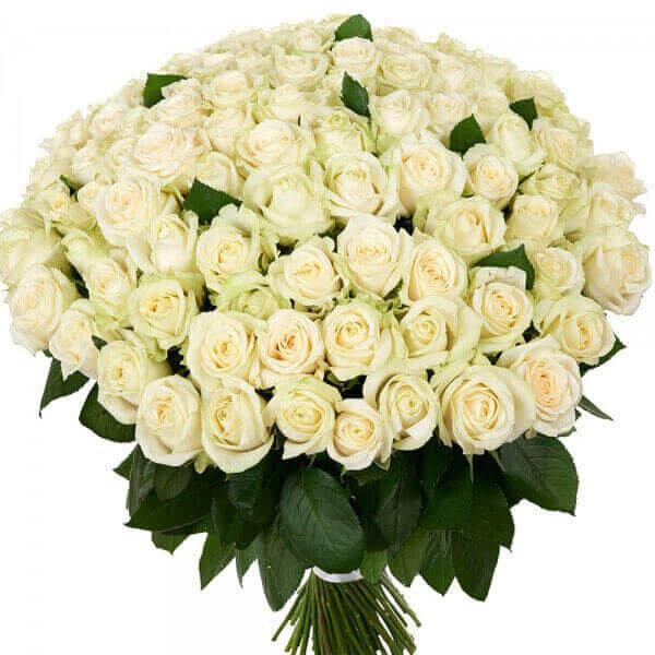 101 baltos rožės gėlių puokštė