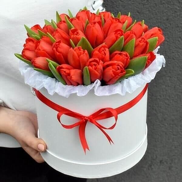 Raudonos tulpės gėlės dėžutėse