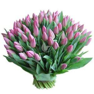 101 violtinė tulpė gėlių puokštės