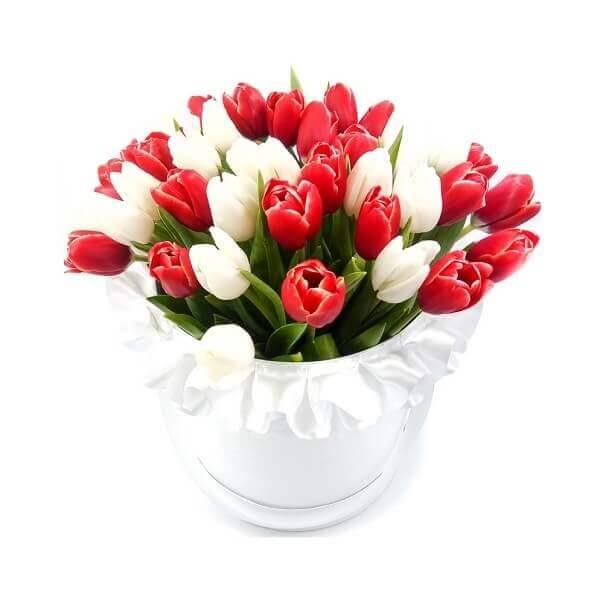 Raudonos baltos tulpės gėlės dėžutėse