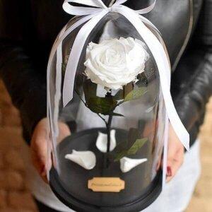Stabilizuota rožė po stikliniu kupolu baltos spalvos