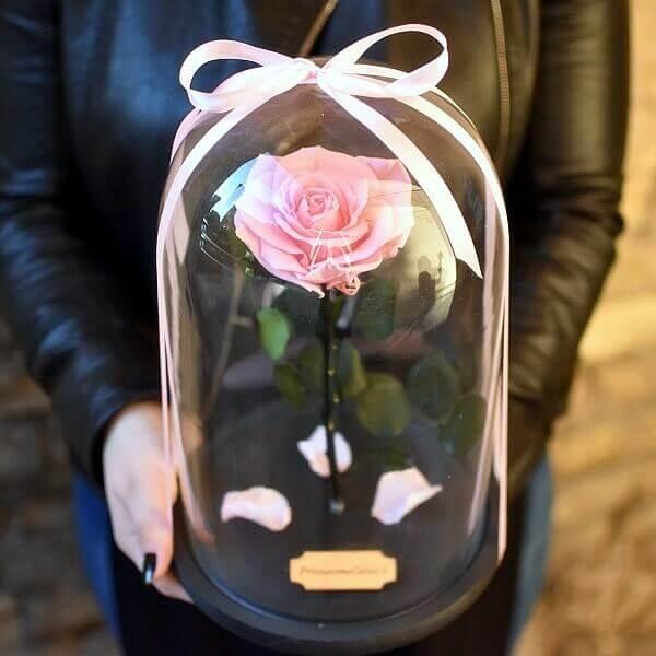 Stabilizuota rožė po kupolu rožnės spalvos