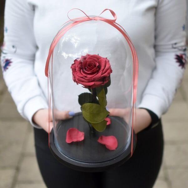Vyšninė stabilizuota rožė po kupolu