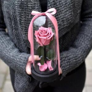 Ryškiai rožinė maža stabilizuota rožė