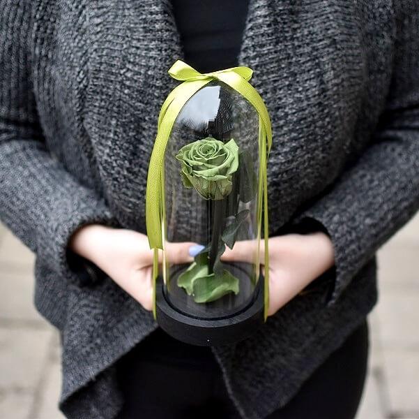 Žalios stabilizuotos rožės po stiklu