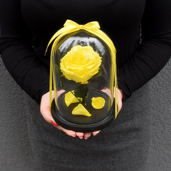 Stabilizuota vidutinė geltona rožė po stiklu