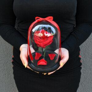 Raudona stabilizuota rožė po gaubtu dovana merginai