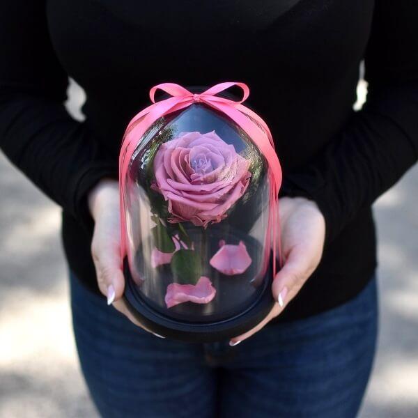 Tamsiai rožinė stabilizuota rožė po stiklu
