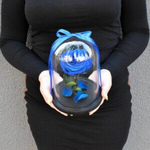 Miegančios rožės po stiklu mėlynos spalvos